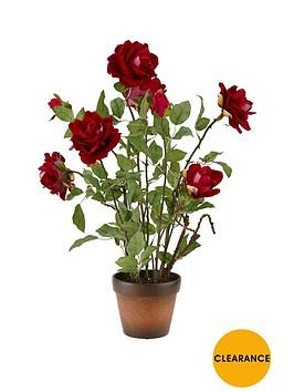 red-roses-in-terracotta-pot