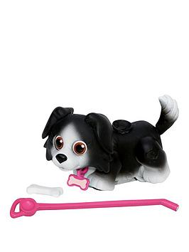 pet-parade-single-puppy-pack-border-collie