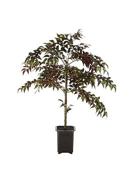 artificial-fiscus-tree-in-pot