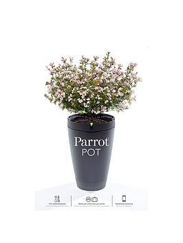 parrot-pot-black