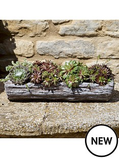 pre-planted-sempervivum-log-with-4-plants