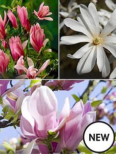 magnolia-set-of-3