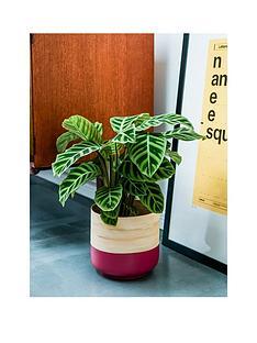 ivyline-bamboo-pink-planter