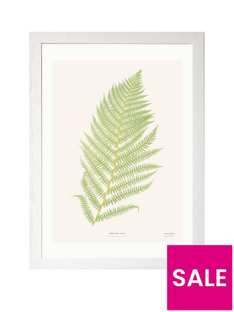 east-end-prints-ferns-2-by-aster-a3-framed-print